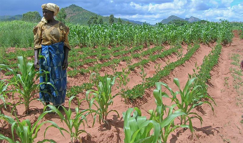 woman in farm field