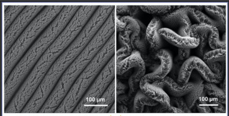 carbon nanotube forests on supercapacitor