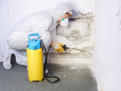 Green Home Solutions mold remediation
