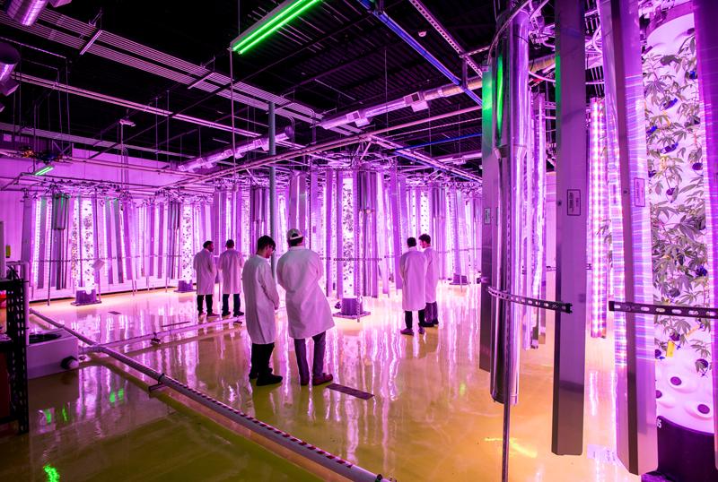 CropTowers growing cannabis plants